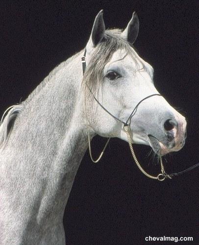 ma passion les chevaux blancs