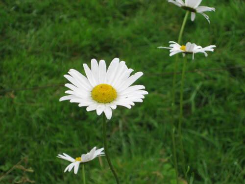 Les fleurs du samedi demandée par Jean Pierre