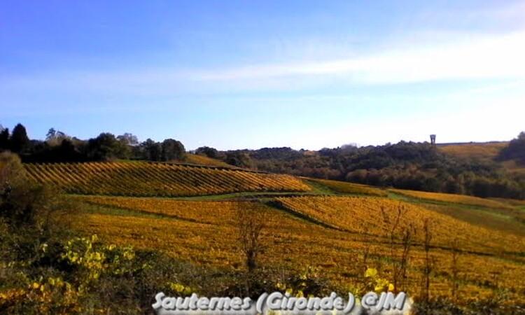 Sunpatiens Famille : Balsaminacées ,erable champetre jaune,photos jour de la toussaint