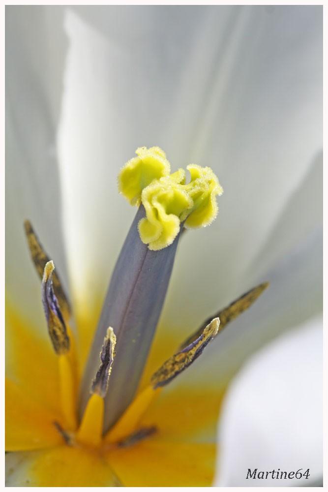 Fleurs----jardin-8250.jpg