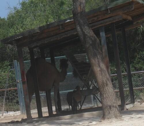 MONTPELLIER NORD, le zoo de Lunaret