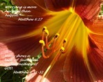 Le Nombre Quarante dans la Bible