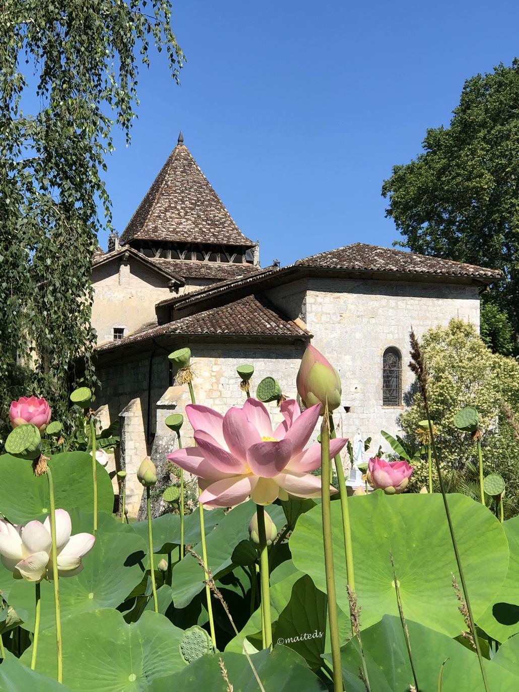 Les lotus de Barbotan-les-Thermes (32)
