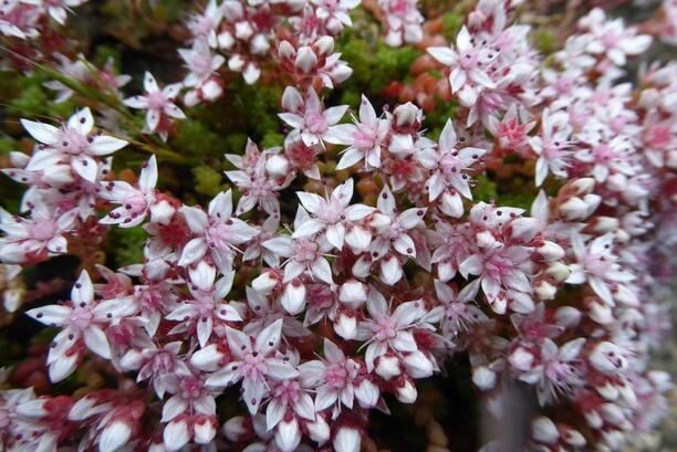 Des photos d'Anne.L : Fleurs et Fruits