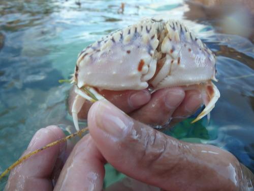 Drôle de crabe