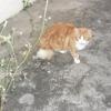 felins129009201505_gros.jpg