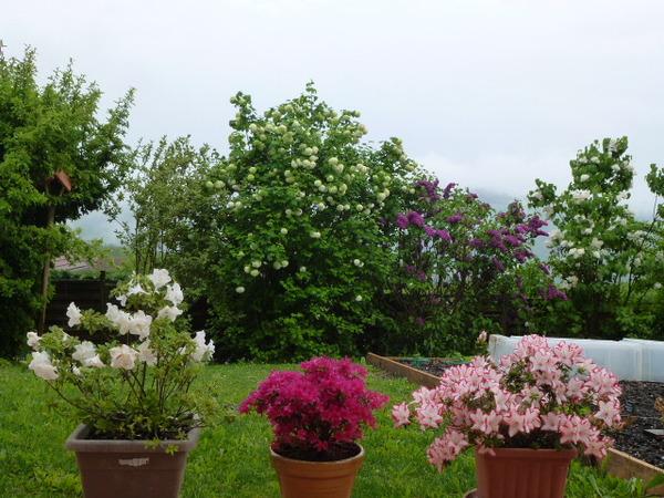 Fleurs d'avril en poèsie