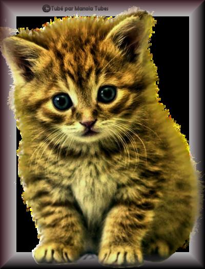 Tube chats - chatons 2989