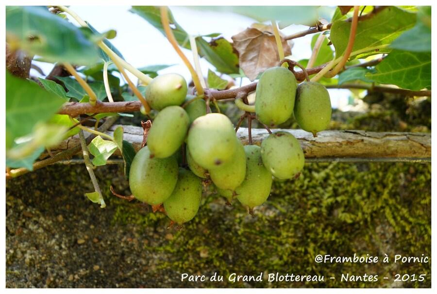 Nantes Parc grand Blottereau - Potager tropical