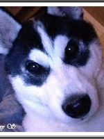 Laïdja (4 mois)