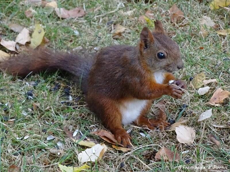 Les petits écureuils du jardin - 2016