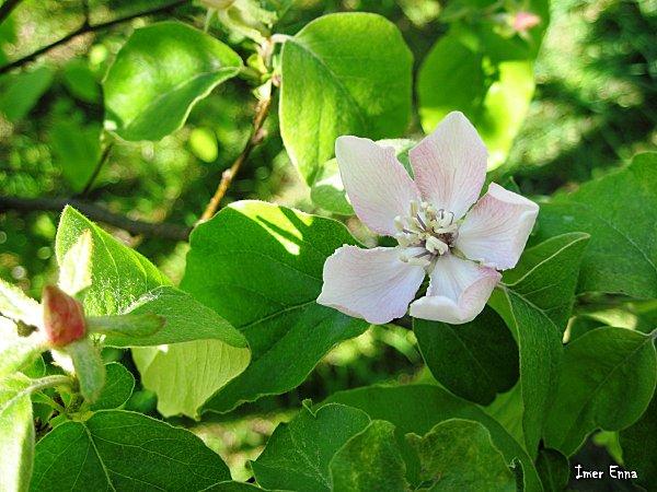 Fleurs-3223.JPG