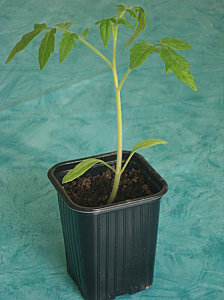 plants-008.jpg