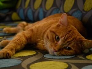Blog de roselyne : Humanité, Nature, Amour et lumière, Enrichir l'environnement de votre chat