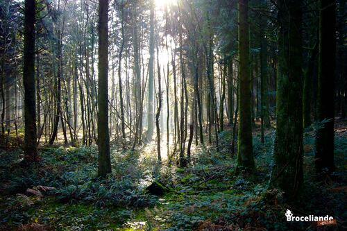 La forêt de Brocéliande ( Ile et Vilaine )