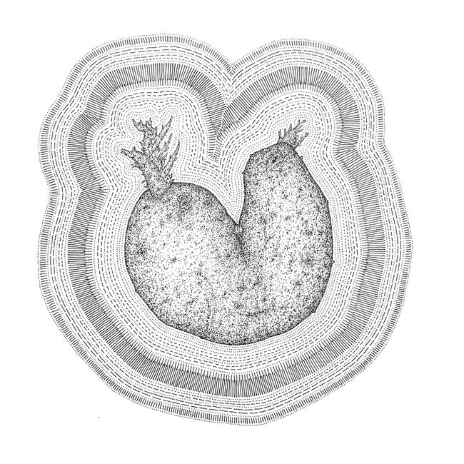 Pomme de terre partagée mais tout de même confiante (2011)