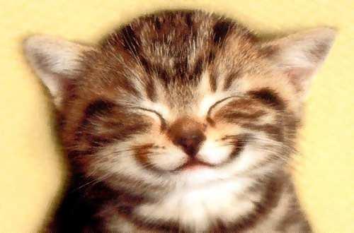 Sourire de chat