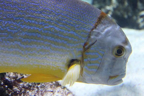 aquarium La Rochelle(4)