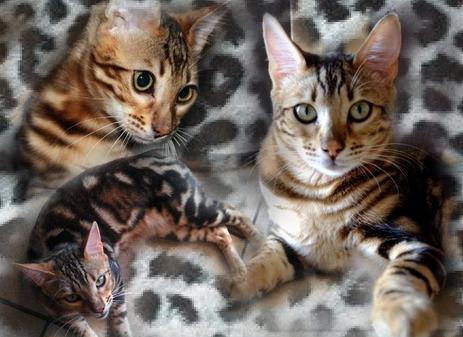 Luluxe8295753-bw-leopard-peau-arriere-plan-ou-la-texture-grande-resolution