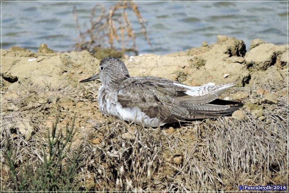 Réserve ornithologique du Teich - 3/10