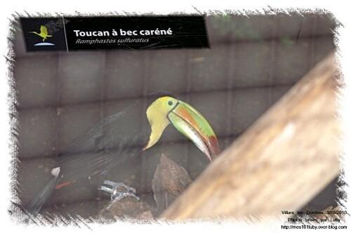 04 toucan 2