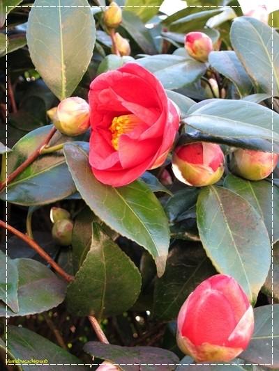 Fleurs-printemps-2011 0824