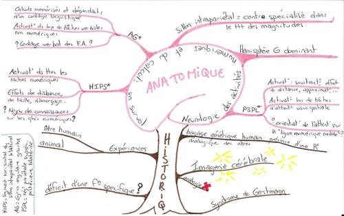 Calcul et dyscalculies - Mind maps de Julie Cattini