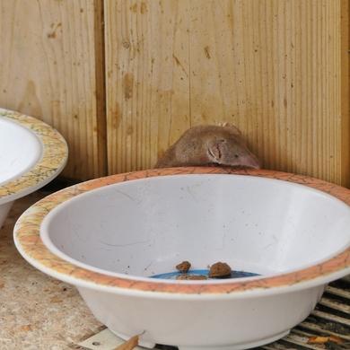 La petite histoire de la musaraigne croquette....