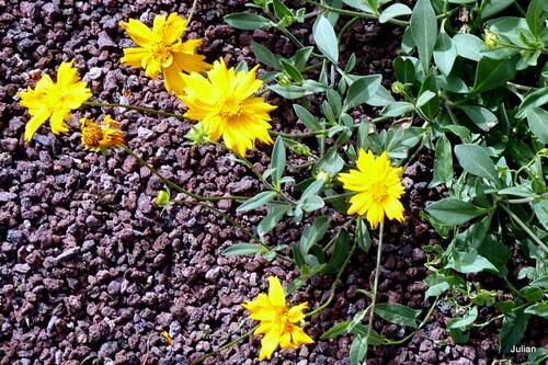 Ce sont des fleurs jaunes