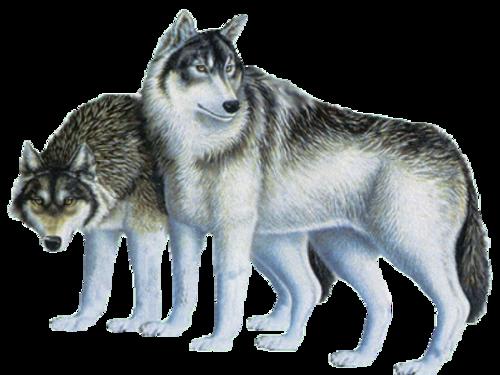 Pour Capucine voilà un défi nature ( le monde des loups)