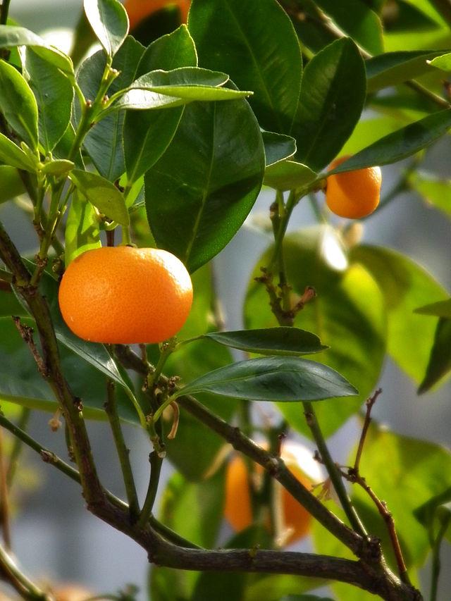 Soufflé à la mandarine