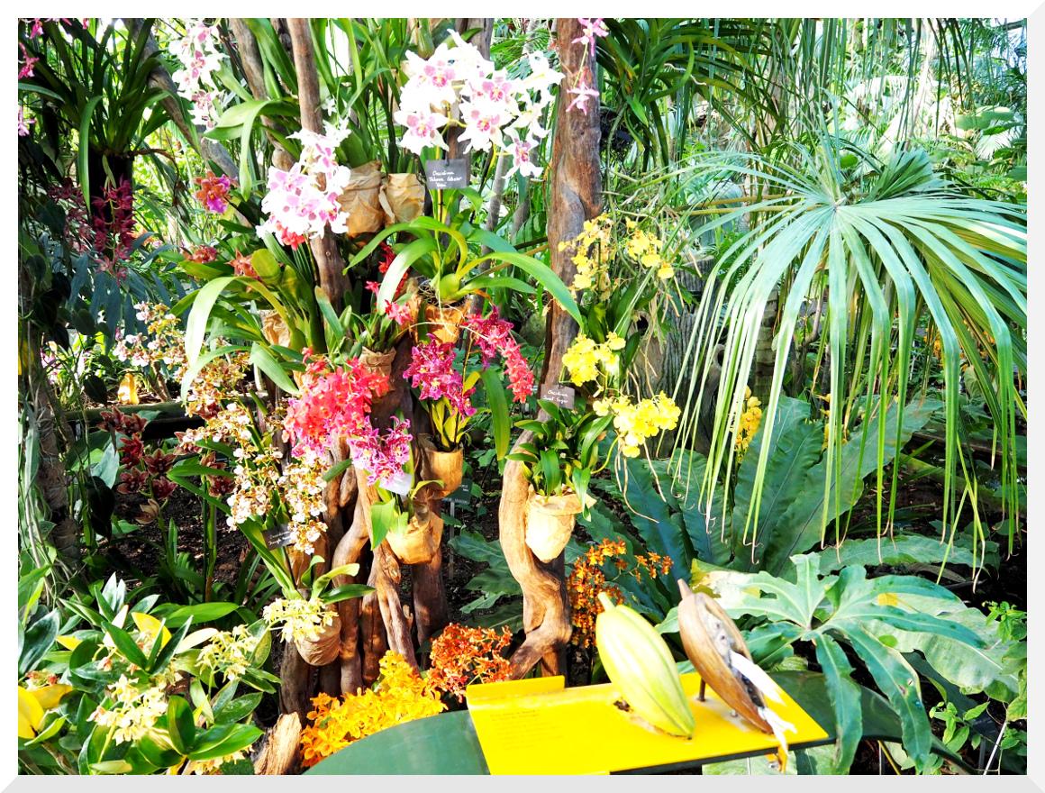 Mille & Une Orchidées. Jardin des Plantes. Paris. - Le-Billet-de-Michel