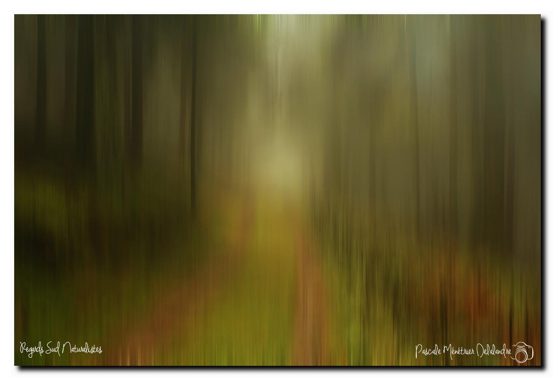 Filés en forêt Bourbonnaise