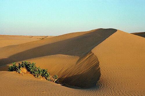 Le désert du Thar (grand désert) en Inde