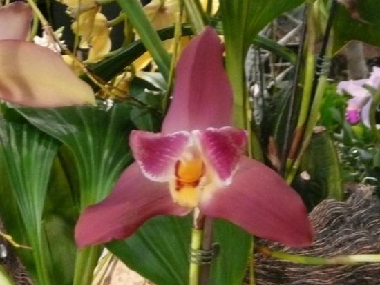2013-Expo orchid Pont sainte Marie 054