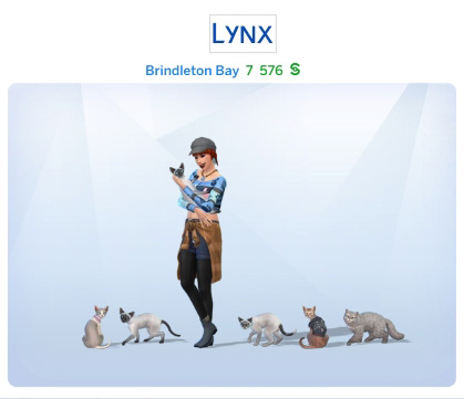 Semaine 3 - Quartier Brindleton Bay - Foyer Lynx