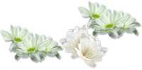 *** Green Flowers***