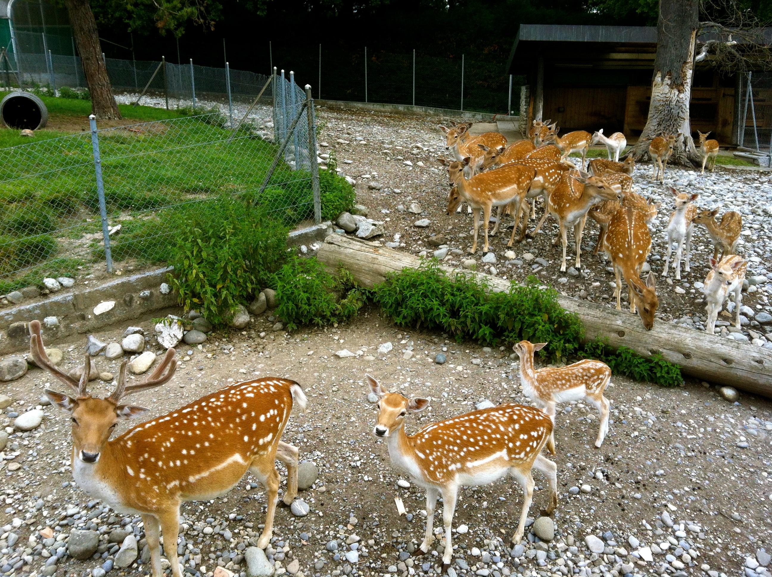 la ville de genve - Jardin Botanique Geneve