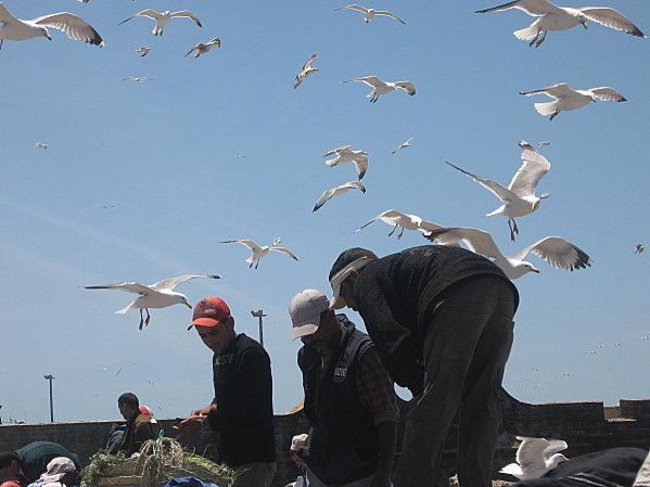 Marrakech 2008 307