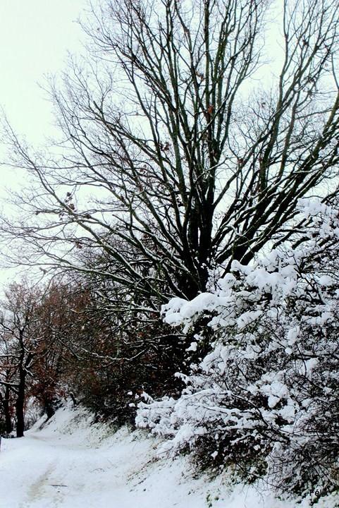 p01---Arbres-et-neige.JPG
