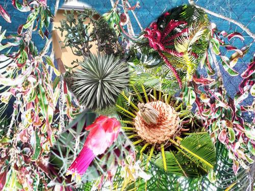 Pêle-mêle du jardin guadeloupéen