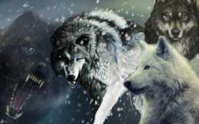 Bannière Loups