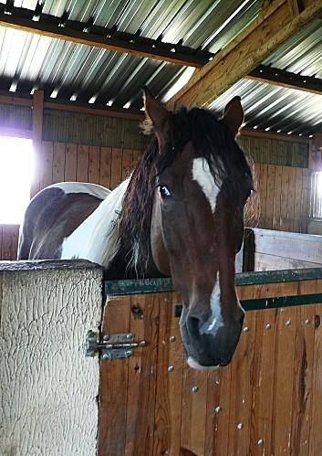 La-Maugerie--cheval-indien-11-10-10-109.jpg