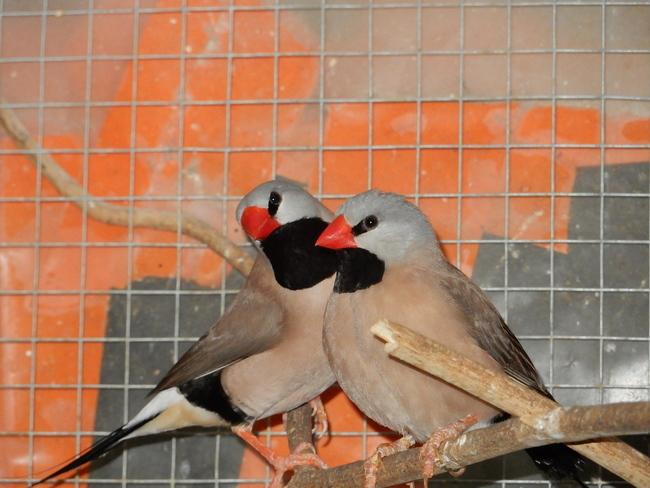 Oiseaux en volière
