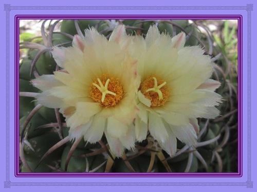 Epines et fleurs