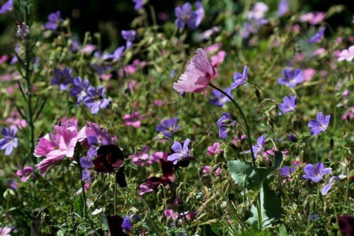 Gravier fleuri