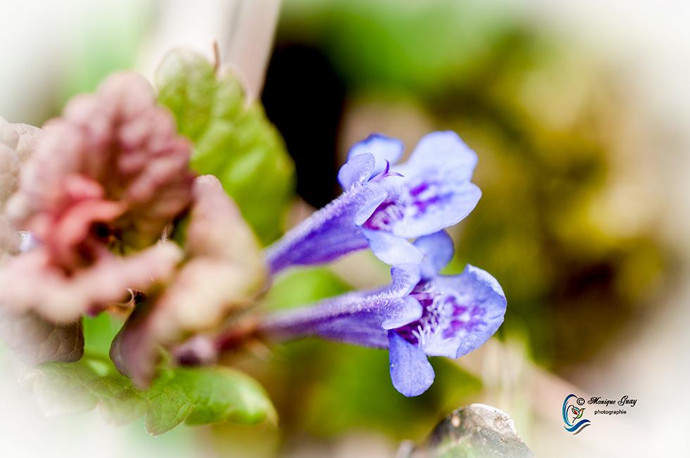 Fleurs bleutées