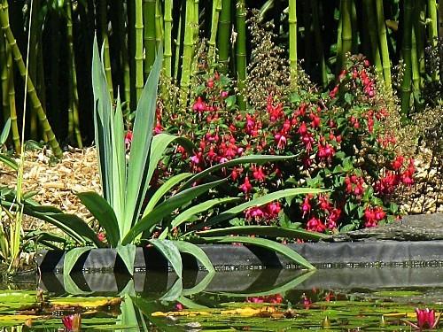 Aloes---fuchsia-8-08-12-IMG_0455.JPG