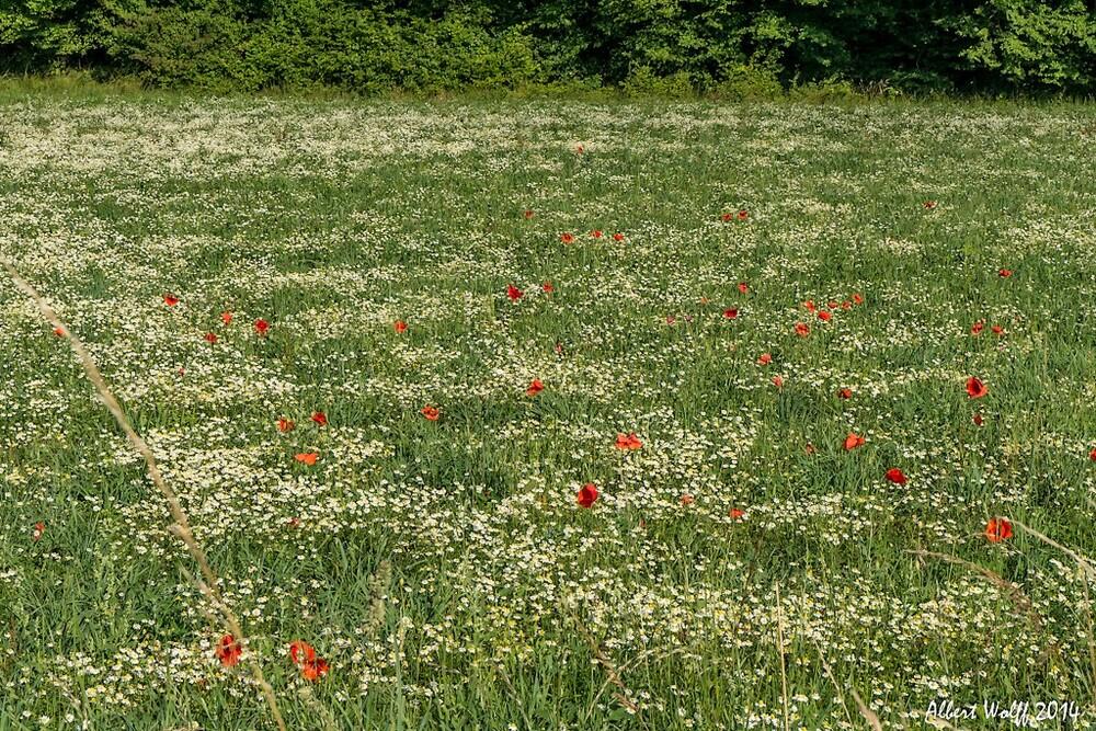Des champs de fleurs