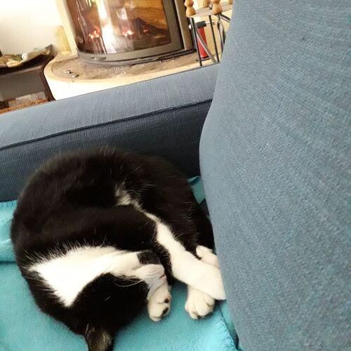 Comment savoir si votre chat a froid !